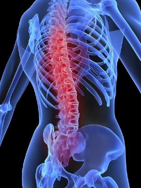 Анатомия человека: Скелет, кости, позвоночник (подборка изображений)
