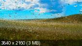 BBC: Планета Земля 2 / Planet Earth II [01-06 из 06] (2016) UHDRip-HEVC 2160p | L1 | 84.90 GB + 115.01 GB
