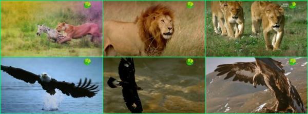 Чудеса животного мира / The Wonder of Animals (2014)